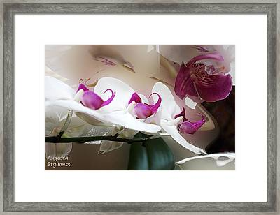 White Orchid Branch Framed Print
