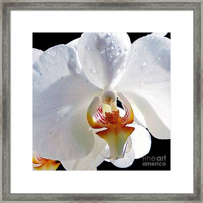 White Orchid Framed Print by Elvira Ladocki
