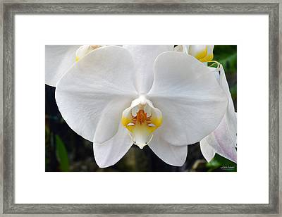 Framed Print featuring the photograph White Orchid by Aloha Art
