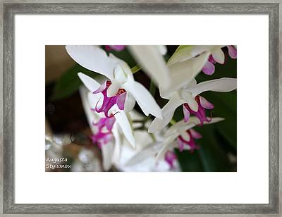 white Orchid from Obove  Framed Print