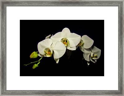 White Orchid II Framed Print