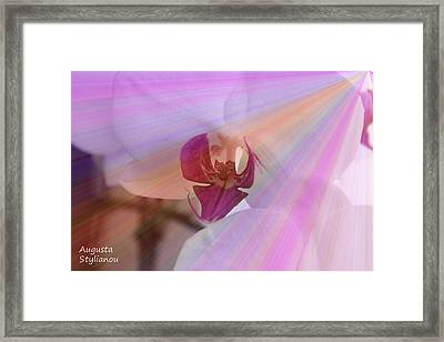 White Orchid In Rays Framed Print