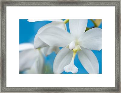 Framed Print featuring the photograph White Orchid by Leigh Anne Meeks