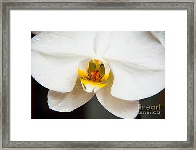 White Orchid Framed Print by Lisa L Silva