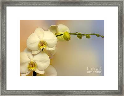 White Orchid Framed Print by Lutz Baar