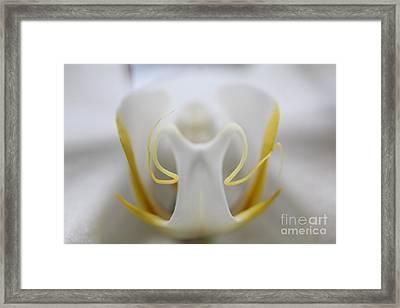 White Orchid Macro Framed Print