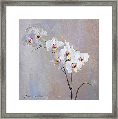 White Orchid Framed Print by Victoria Kharchenko