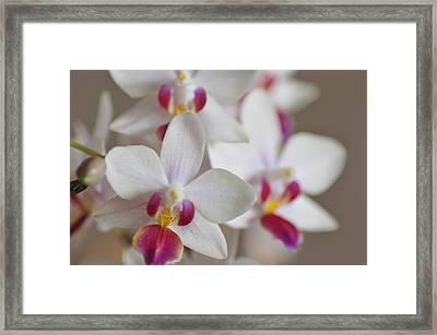 White Orchid With Purple Framed Print by Lena Photo Art