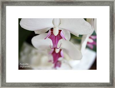 white Orchid.Close-up Framed Print by Augusta Stylianou