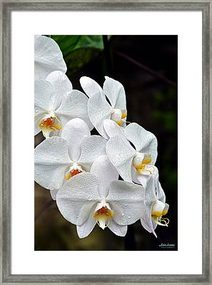 Framed Print featuring the photograph White Orchids After The Rain by Aloha Art