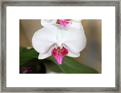white Orchids  Framed Print by Augusta Stylianou