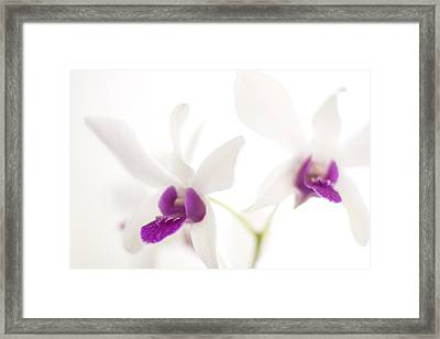 White Orchids Framed Print by Bradley R Youngberg