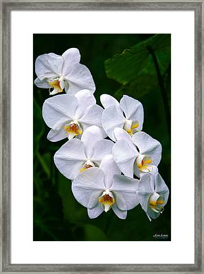 Framed Print featuring the photograph White Orchids by Aloha Art