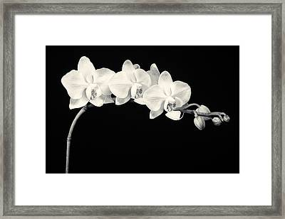 White Orchids Monochrome Framed Print