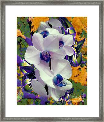 White Orchids With A Touch Of Purple Framed Print by Doris Wood