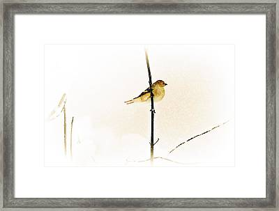 White Out Conditions Framed Print
