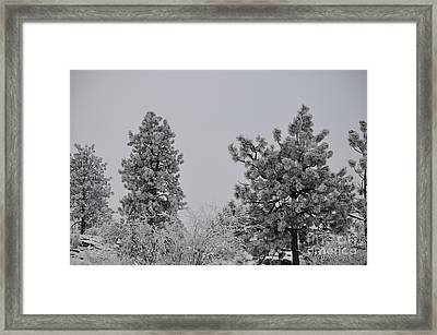White Out Framed Print by Greg Patzer