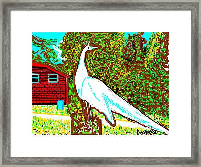 White Peacock Framed Print by Anand Swaroop Manchiraju