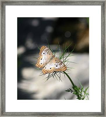 Framed Print featuring the photograph White Peacock by Karen Silvestri