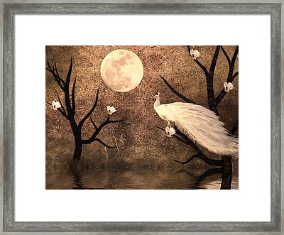 White Peacock Framed Print