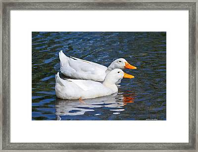 White Pekin Ducks #2 Framed Print by Ann Murphy