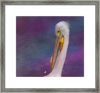 White Pelican Framed Print by Hazel Billingsley