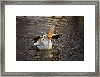 Framed Print featuring the photograph White Pelican by Sharon Jones