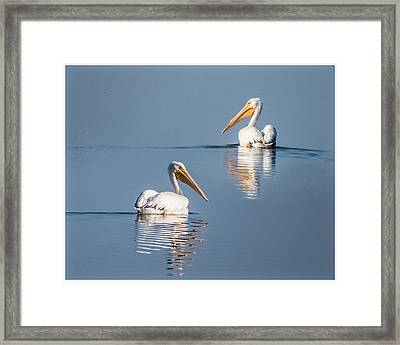 Framed Print featuring the photograph White Pelicans by Patti Deters
