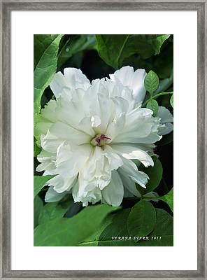 Framed Print featuring the photograph White Peonese by Verana Stark