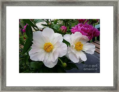 Framed Print featuring the photograph White Peony Flower by Rose Wang