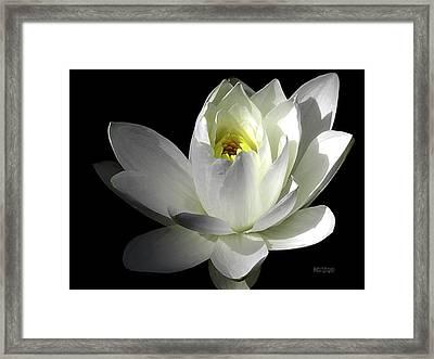 White Petals Aquatic Bloom Framed Print