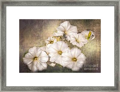 White Petunias - Texture Framed Print by Bob and Nancy Kendrick