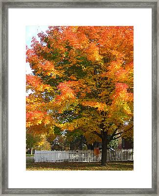 White Picket Fence And Friend Framed Print by Guy Ricketts