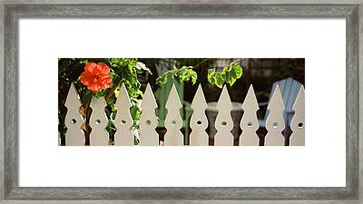 White Picket Fence And Red Hibiscus Framed Print by Panoramic Images