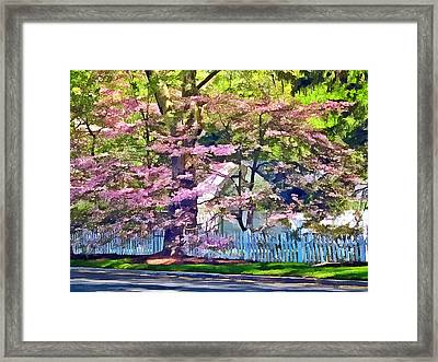 White Picket Fence By Flowering Trees Framed Print