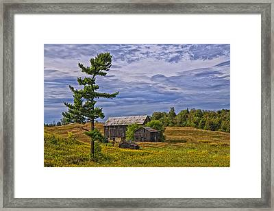 Framed Print featuring the photograph White Pine And Old Barn by Gary Hall