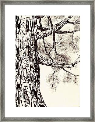 White Pine Framed Print