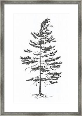 White Pine Framed Print