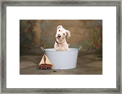 White Pitbull Puppy Portrait Framed Print by James BO  Insogna