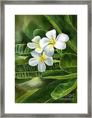 White Plumeria Flowers Framed Print by Sharon Freeman