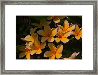 Framed Print featuring the photograph White Plumeria by Miguel Winterpacht