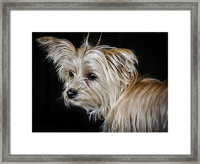 White Puppy Framed Print