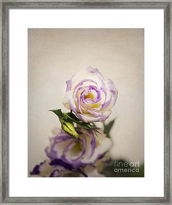 White Purple Lisianthus Framed Print