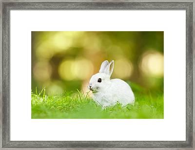 White Rabbit Framed Print by Roeselien Raimond