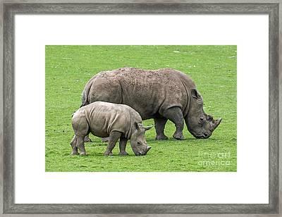 White Rhino 8 Framed Print