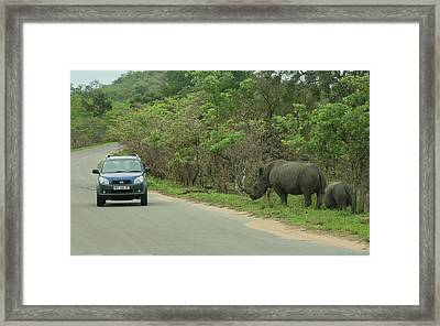 White Rhino And Calf Framed Print by Bob Gibbons