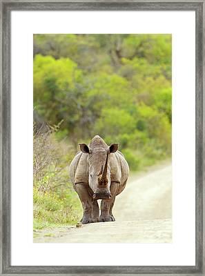 White Rhino Framed Print by Bildagentur-online/mcphoto-schaef