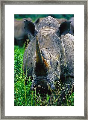 Framed Print featuring the photograph White Rhino by Dennis Cox WorldViews