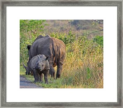 White Rhino  Framed Print by Gerhardt Marais