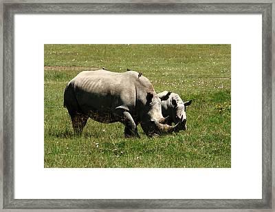 White Rhinoceros Framed Print